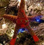 starfish snorkle