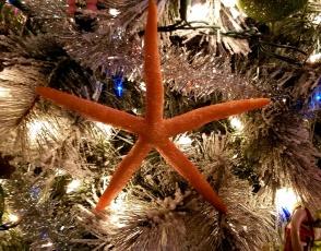 xmas starfish