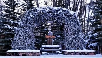 Jackson antlers