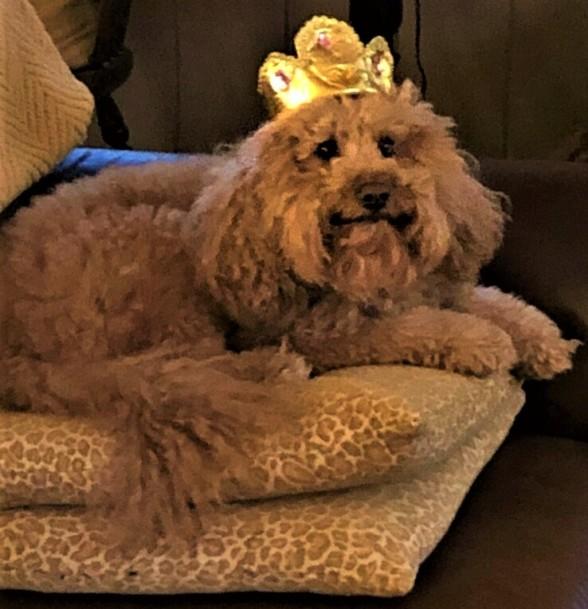 Teddy in crown