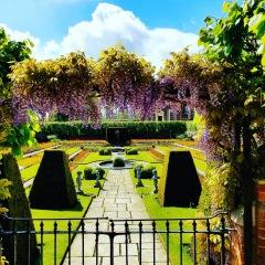 hcp garden view wisteria