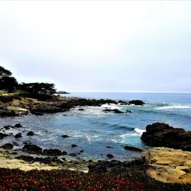 pacific grove cove1